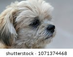 portrait of a sad face dog | Shutterstock . vector #1071374468