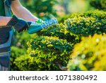 plants topiary trimming by... | Shutterstock . vector #1071380492