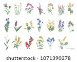 collection of beautiful wild... | Shutterstock . vector #1071390278