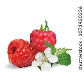 fresh  nutritious and tasty... | Shutterstock .eps vector #1071420236