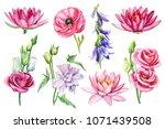 Set Flowers  Ranunculus  Lotus...