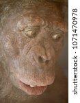 prehistoric man portrait   Shutterstock . vector #1071470978