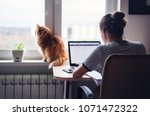 Stock photo girl student freelancer working at home on a task the cat is sitting on the window 1071472322