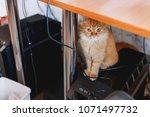 cute ginger cat sitting under... | Shutterstock . vector #1071497732