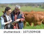 couple of stock breeders using... | Shutterstock . vector #1071509438