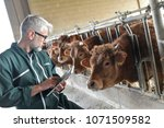 cow breeder checking on... | Shutterstock . vector #1071509582