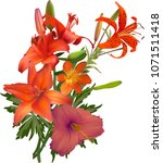 illustration with lily flower... | Shutterstock .eps vector #1071511418