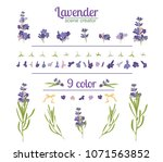 lavender flower on white... | Shutterstock .eps vector #1071563852
