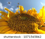stingless bees are collecting... | Shutterstock . vector #1071565862
