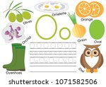 letter o. alphabet  english... | Shutterstock .eps vector #1071582506