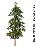 Fir Tree Isolated On White...