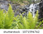 yellow green leaf and waterfall ... | Shutterstock . vector #1071596762