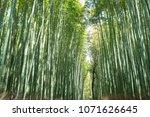 bamboo walk path kyoto | Shutterstock . vector #1071626645