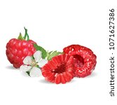 fresh  nutritious and tasty... | Shutterstock .eps vector #1071627386