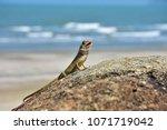 a lizard on rock with blurly... | Shutterstock . vector #1071719042