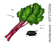 rhubarb vector drawing set....   Shutterstock .eps vector #1071723326