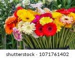 gerbera flowers of different... | Shutterstock . vector #1071761402