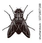 vector silhouette of fly ... | Shutterstock .eps vector #1071807188