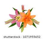 beautiful lily flower isolated... | Shutterstock . vector #1071955652