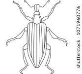 beetle icon. simple element... | Shutterstock .eps vector #1071960776