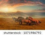 horses at mountain meadows ... | Shutterstock . vector #1071986792