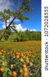 spring landscape. mountain... | Shutterstock . vector #1072028555