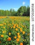 spring landscape. mountain... | Shutterstock . vector #1072028558