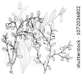 vector drawing herbs  floral... | Shutterstock .eps vector #1072036802