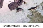 overhead view of seychelles... | Shutterstock . vector #1072041698