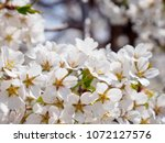 close up macro detail of... | Shutterstock . vector #1072127576