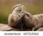 Oriental Short Clawed Otters...