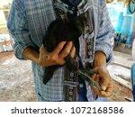 a man carrying a black cock | Shutterstock . vector #1072168586