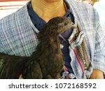 a man carrying a black cock | Shutterstock . vector #1072168592