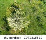 amazing drone view of trees in...   Shutterstock . vector #1072315532