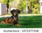 a mixed breed dog enjoy in park | Shutterstock . vector #1072377248