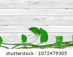 money plant or lucky plant on... | Shutterstock . vector #1072479305