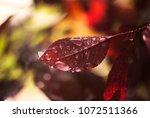 waterdrops from a summer rain...   Shutterstock . vector #1072511366