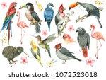 watercolor tropical birds set.... | Shutterstock . vector #1072523018
