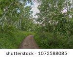birch forest ui the arkaim ...