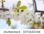 close up view of the yellow... | Shutterstock . vector #1072632146