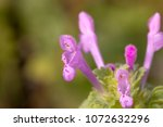 close up view of the beautiful... | Shutterstock . vector #1072632296