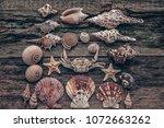 Seashells  Crab And Starfish On ...