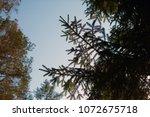 details of nature. christmas... | Shutterstock . vector #1072675718
