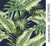 green banana  monstera palm... | Shutterstock .eps vector #1072719905