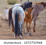 a wild horse in nevada nuzzles... | Shutterstock . vector #1072752968
