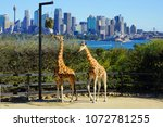 sydney  australia  5 aug 2017 ... | Shutterstock . vector #1072781255
