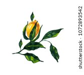 hand drawn watercolor lemon... | Shutterstock . vector #1072893542