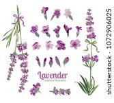 lavender flower on white... | Shutterstock .eps vector #1072906025