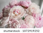 cute and lovely peony. many... | Shutterstock . vector #1072919252