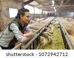 breeder in barn looking at...   Shutterstock . vector #1072942712